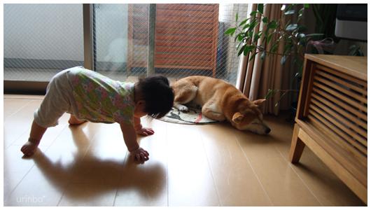 yudu_saku0908.jpg